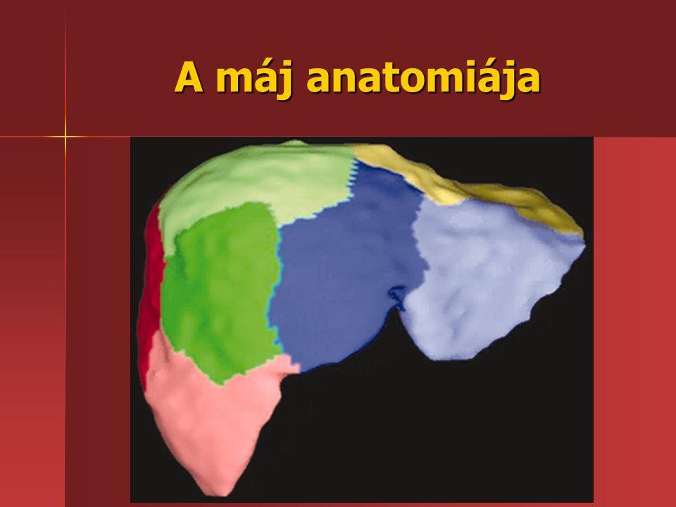 A máj anatomiája