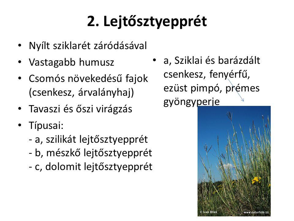 2. Lejtősztyepprét Nyílt sziklarét záródásával Vastagabb humusz Csomós növekedésű fajok (csenkesz, árvalányhaj) Tavaszi és őszi virágzás Típusai: - a,