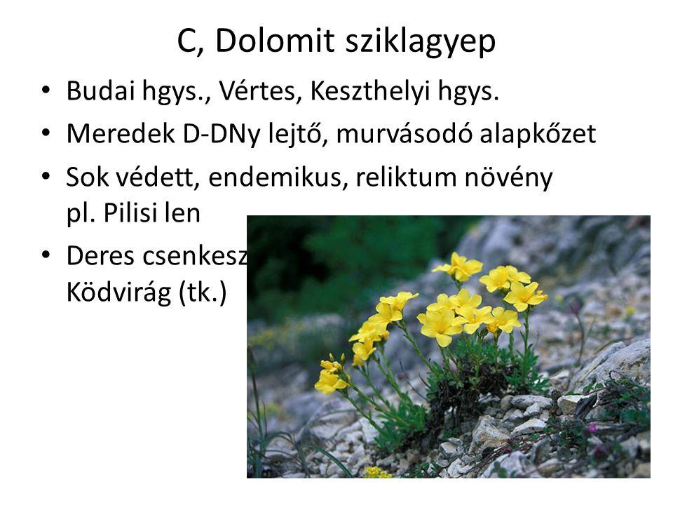 C, Dolomit sziklagyep Budai hgys., Vértes, Keszthelyi hgys. Meredek D-DNy lejtő, murvásodó alapkőzet Sok védett, endemikus, reliktum növény pl. Pilisi