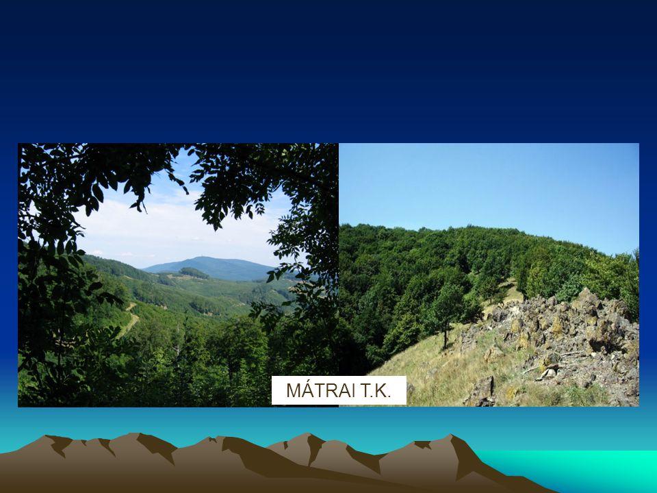 NÖVÉNYVILÁG A Mátra erdős táj, változatos erdőtársulásokkal.
