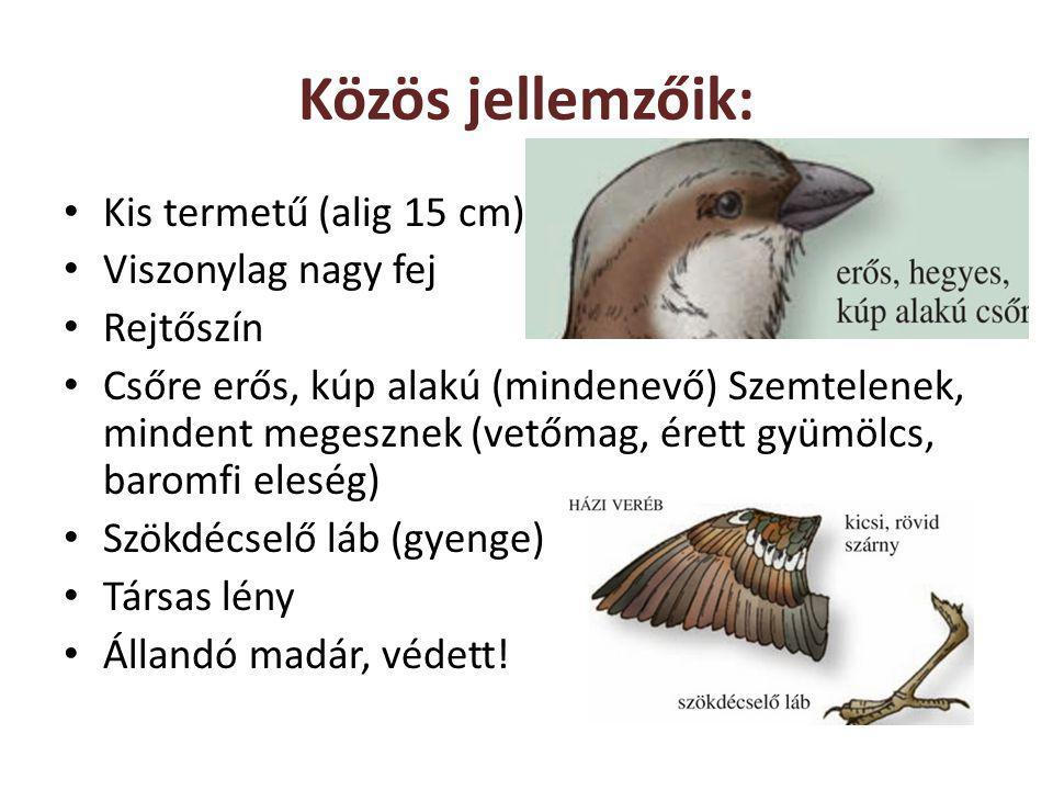 Közös jellemzőik: Kis termetű (alig 15 cm) Viszonylag nagy fej Rejtőszín Csőre erős, kúp alakú (mindenevő) Szemtelenek, mindent megesznek (vetőmag, ér
