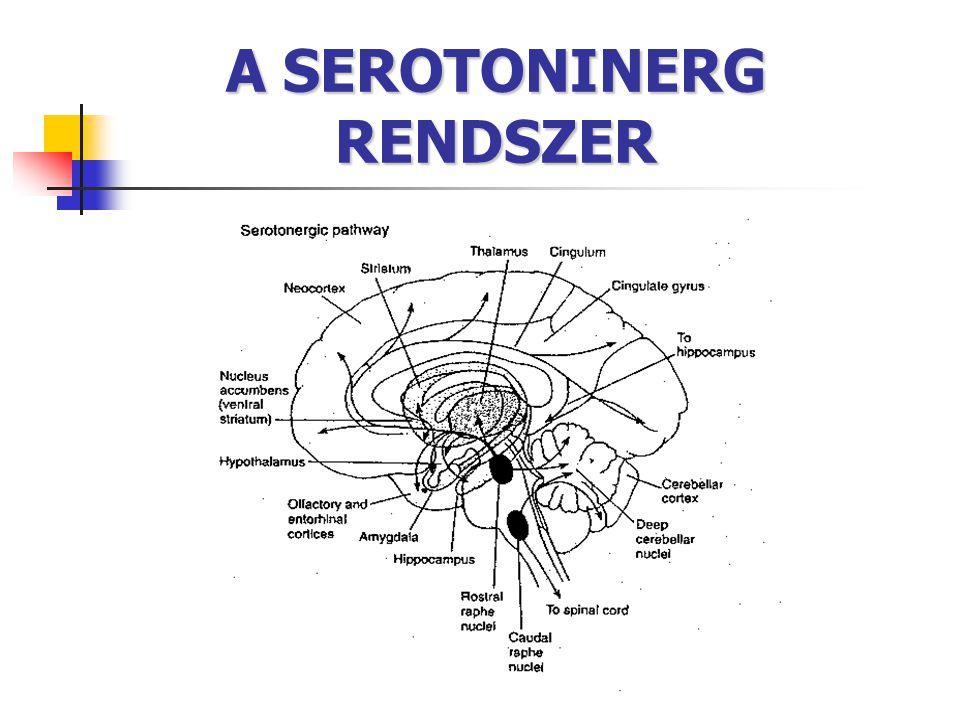 A SEROTONINERG RENDSZER