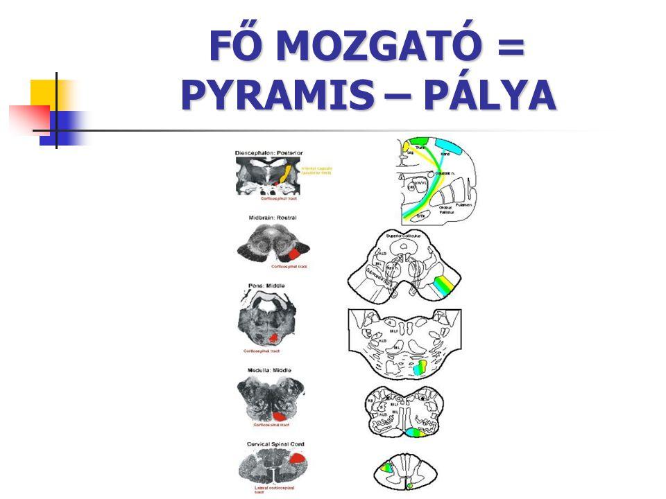 FŐ MOZGATÓ = PYRAMIS – PÁLYA
