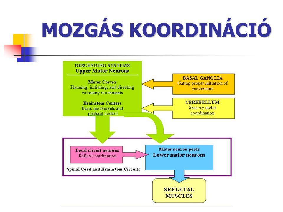 MOZGÁS KOORDINÁCIÓ