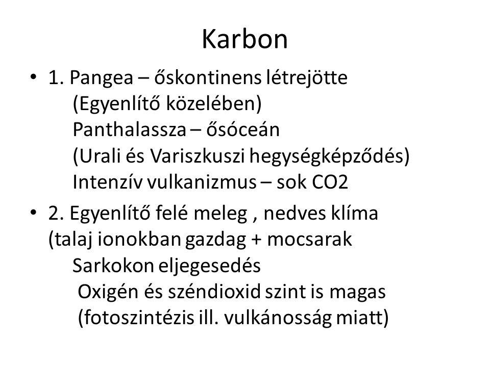 Karbon 1. Pangea – őskontinens létrejötte (Egyenlítő közelében) Panthalassza – ősóceán (Urali és Variszkuszi hegységképződés) Intenzív vulkanizmus – s