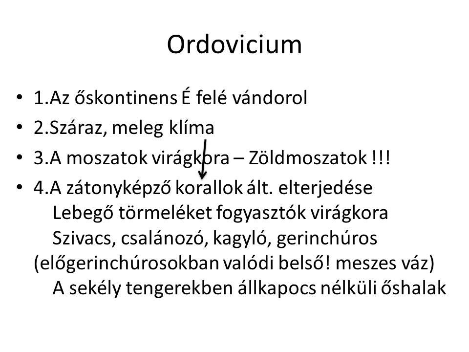Ordovicium 1.Az őskontinens É felé vándorol 2.Száraz, meleg klíma 3.A moszatok virágkora – Zöldmoszatok !!! 4.A zátonyképző korallok ált. elterjedése