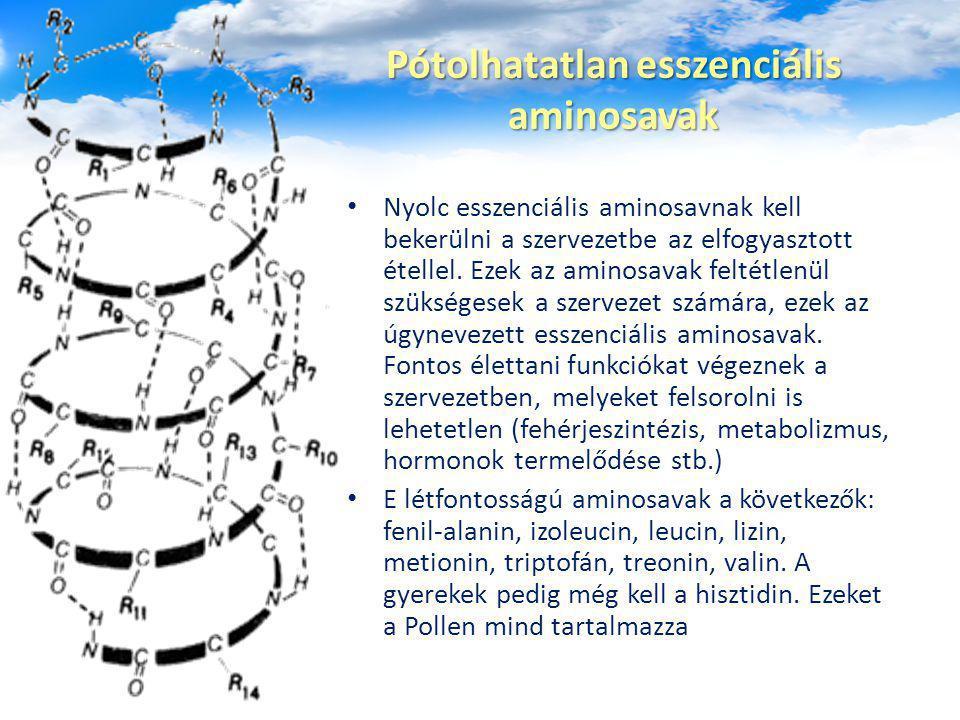 Pótolhatatlan esszenciális aminosavak Nyolc esszenciális aminosavnak kell bekerülni a szervezetbe az elfogyasztott étellel. Ezek az aminosavak feltétl