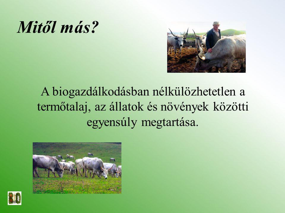 Mitől más? A biogazdálkodásban nélkülözhetetlen a termőtalaj, az állatok és növények közötti egyensúly megtartása.