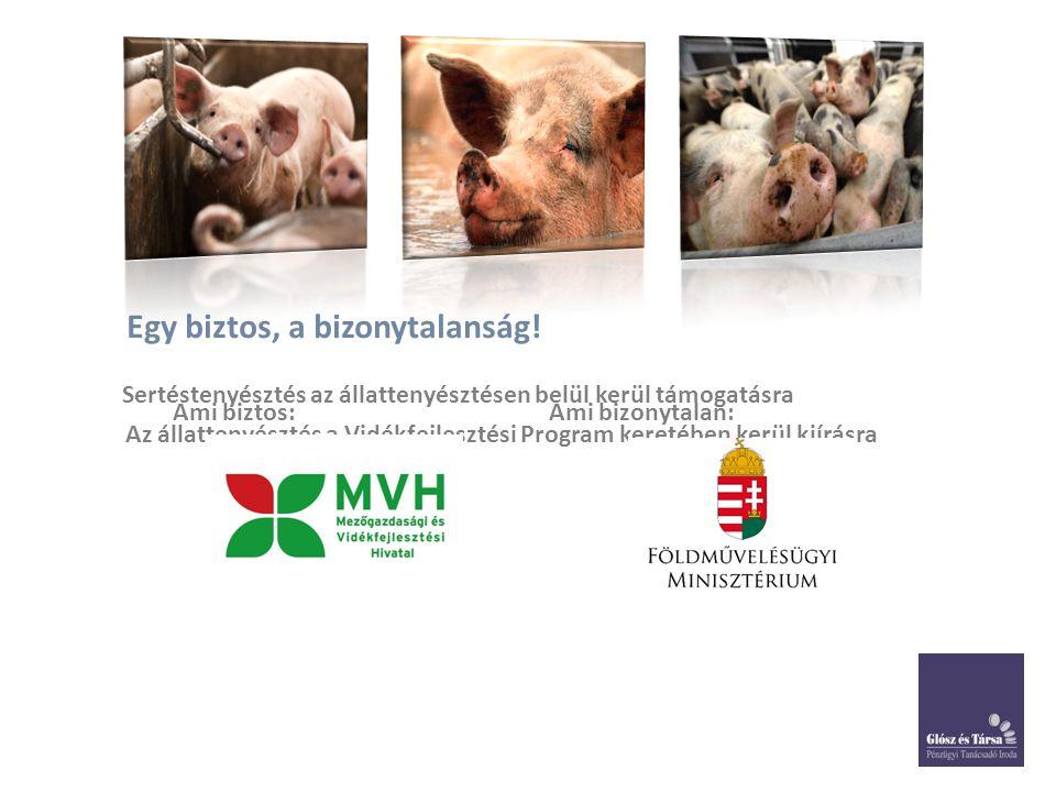 Egy biztos, a bizonytalanság! Sertéstenyésztés az állattenyésztésen belül kerül támogatásra Az állattenyésztés a Vidékfejlesztési Program keretében ke