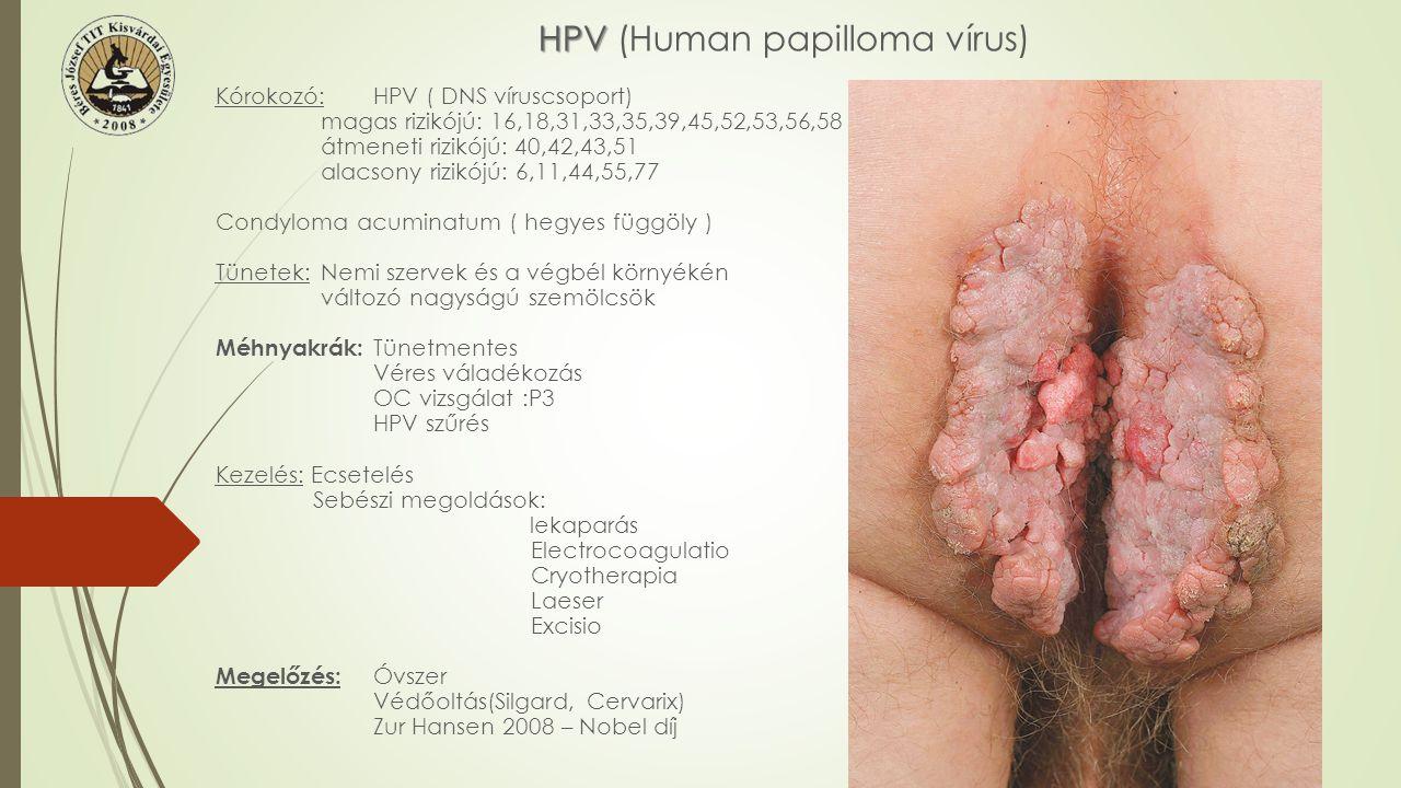 HPV HPV (Human papilloma vírus) Kórokozó:HPV ( DNS víruscsoport) magas rizikójú: 16,18,31,33,35,39,45,52,53,56,58 átmeneti rizikójú: 40,42,43,51 alacs