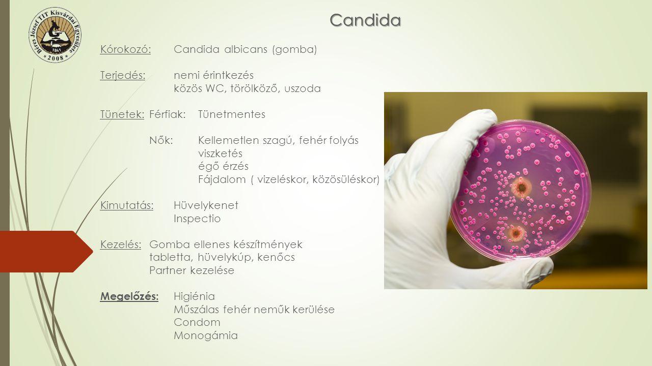 Candida Kórokozó:Candida albicans (gomba) Terjedés:nemi érintkezés közös WC, törölköző, uszoda Tünetek:Férfiak:Tünetmentes Nők:Kellemetlen szagú, fehé