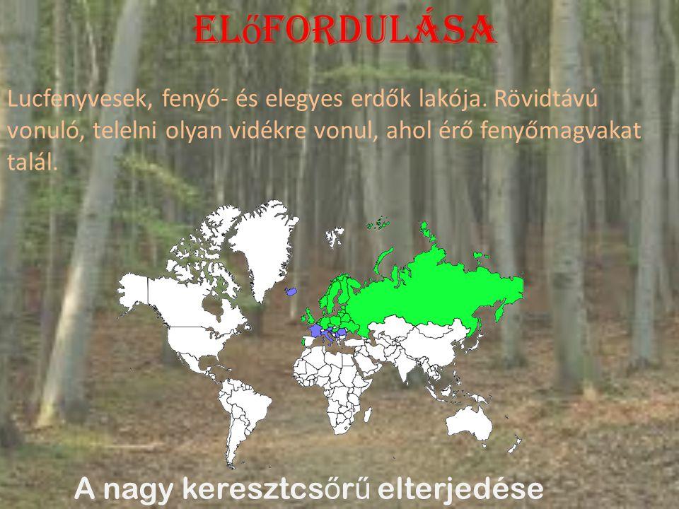El ő fordulása A nagy keresztcs ő r ű elterjedése Lucfenyvesek, fenyő- és elegyes erdők lakója.