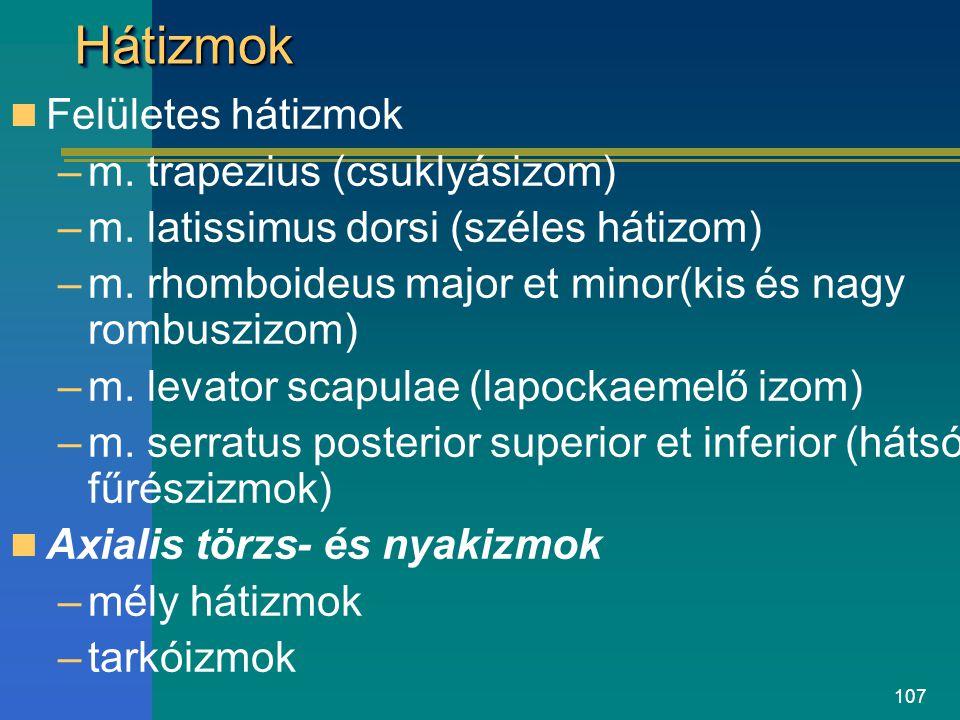 107 HátizmokHátizmok Felületes hátizmok –m. trapezius (csuklyásizom) –m. latissimus dorsi (széles hátizom) –m. rhomboideus major et minor(kis és nagy