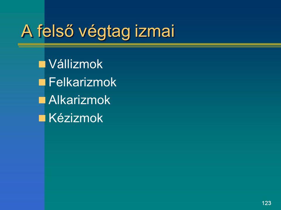 123 A felső végtag izmai Vállizmok Felkarizmok Alkarizmok Kézizmok
