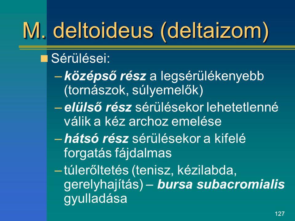 127 M. deltoideus (deltaizom) Sérülései: –középső rész a legsérülékenyebb (tornászok, súlyemelők) –elülső rész sérülésekor lehetetlenné válik a kéz ar