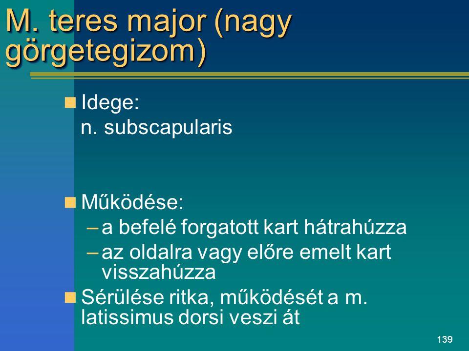 139 M. teres major (nagy görgetegizom) Idege: n. subscapularis Működése: –a befelé forgatott kart hátrahúzza –az oldalra vagy előre emelt kart visszah