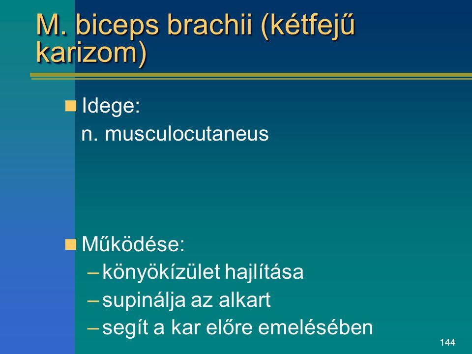 144 M. biceps brachii (kétfejű karizom) Idege: n. musculocutaneus Működése: –könyökízület hajlítása –supinálja az alkart –segít a kar előre emelésében