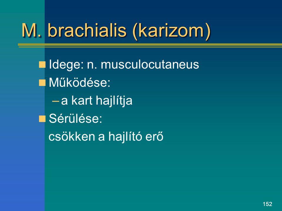 152 M. brachialis (karizom) Idege: n. musculocutaneus Működése: –a kart hajlítja Sérülése: csökken a hajlító erő