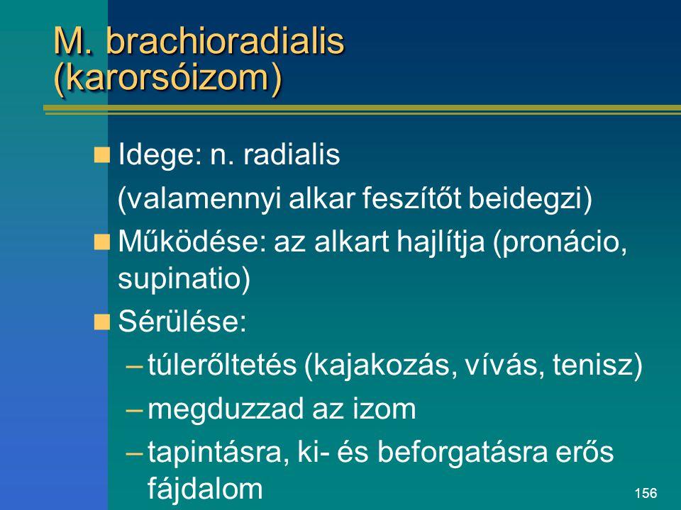 156 M. brachioradialis (karorsóizom) Idege: n. radialis (valamennyi alkar feszítőt beidegzi) Működése: az alkart hajlítja (pronácio, supinatio) Sérülé