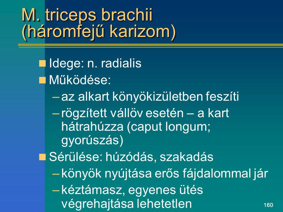 160 M. triceps brachii (háromfejű karizom) Idege: n. radialis Működése: –az alkart könyökizületben feszíti –rögzített vállöv esetén – a kart hátrahúzz