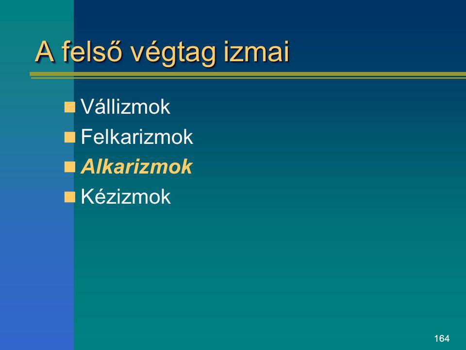 164 A felső végtag izmai Vállizmok Felkarizmok Alkarizmok Kézizmok