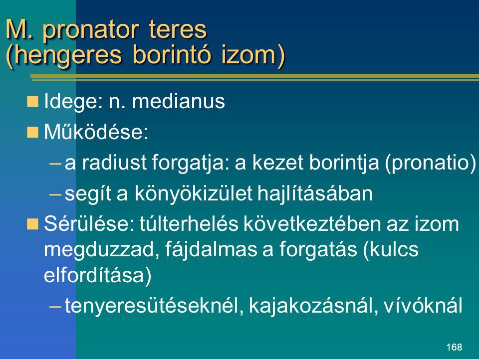 168 M. pronator teres (hengeres borintó izom) Idege: n. medianus Működése: –a radiust forgatja: a kezet borintja (pronatio) –segít a könyökizület hajl