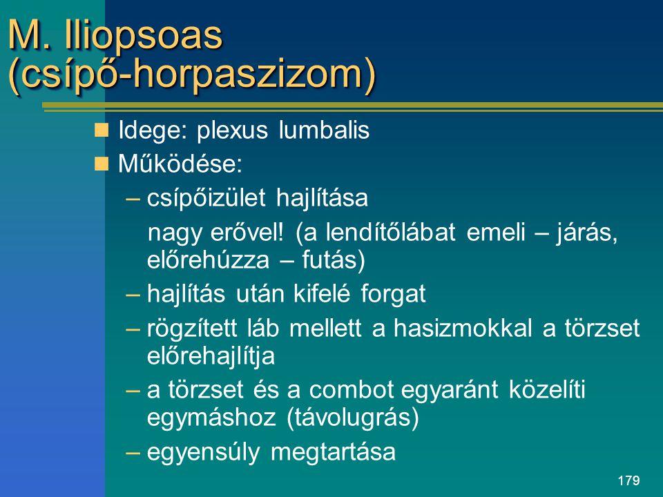 179 M. Iliopsoas (csípő-horpaszizom) Idege: plexus lumbalis Működése: –csípőizület hajlítása nagy erővel! (a lendítőlábat emeli – járás, előrehúzza –