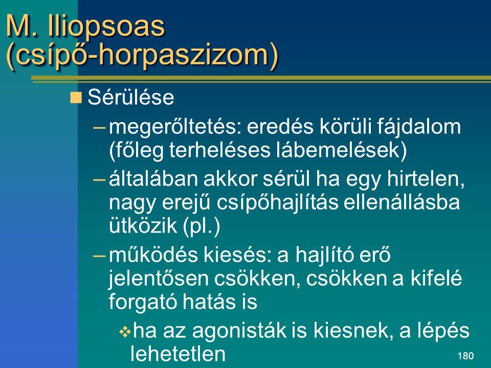 180 M. Iliopsoas (csípő-horpaszizom) Sérülése –megerőltetés: eredés körüli fájdalom (főleg terheléses lábemelések) –általában akkor sérül ha egy hirte