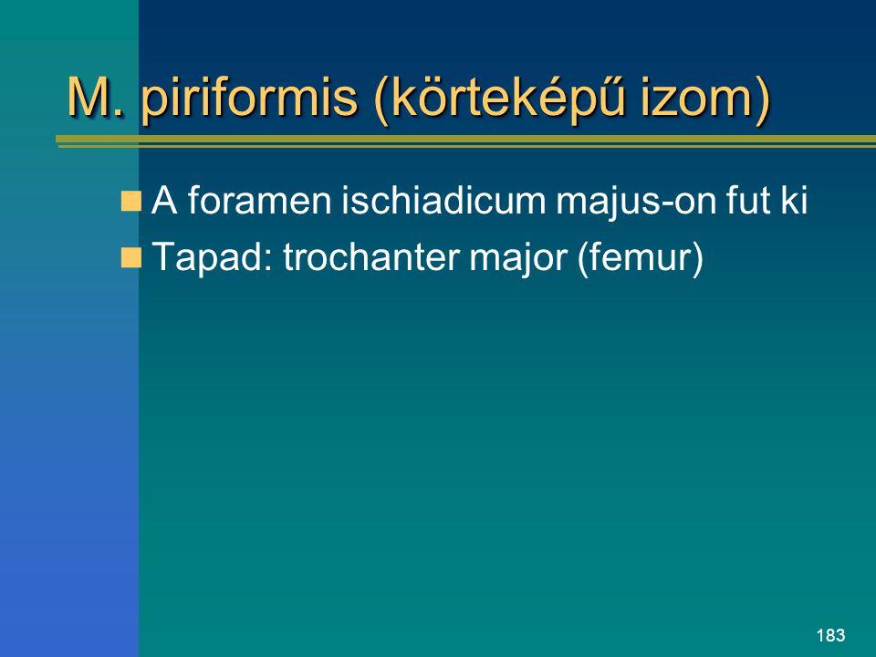 183 M. piriformis (körteképű izom) A foramen ischiadicum majus-on fut ki Tapad: trochanter major (femur)