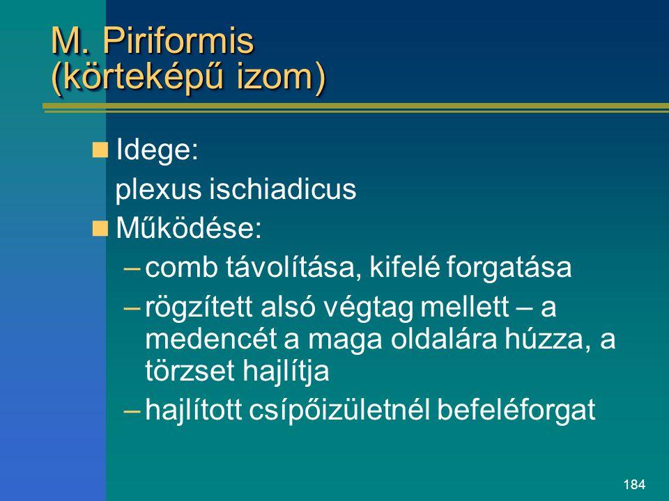 184 M. Piriformis (körteképű izom) Idege: plexus ischiadicus Működése: –comb távolítása, kifelé forgatása –rögzített alsó végtag mellett – a medencét