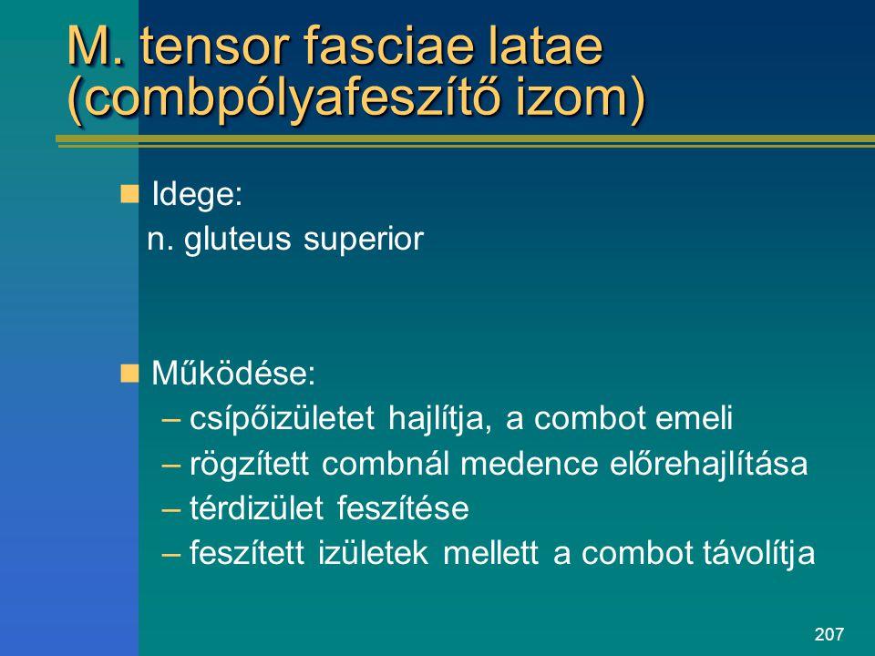 207 M. tensor fasciae latae (combpólyafeszítő izom) Idege: n. gluteus superior Működése: –csípőizületet hajlítja, a combot emeli –rögzített combnál me