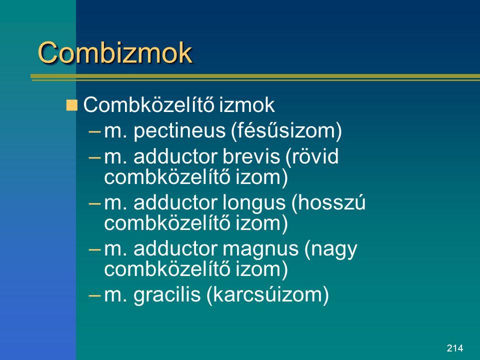 214 CombizmokCombizmok Combközelítő izmok –m. pectineus (fésűsizom) –m. adductor brevis (rövid combközelítő izom) –m. adductor longus (hosszú combköze