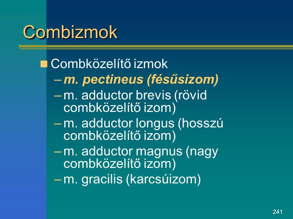 241 CombizmokCombizmok Combközelítő izmok –m. pectineus (fésűsizom) –m. adductor brevis (rövid combközelítő izom) –m. adductor longus (hosszú combköze