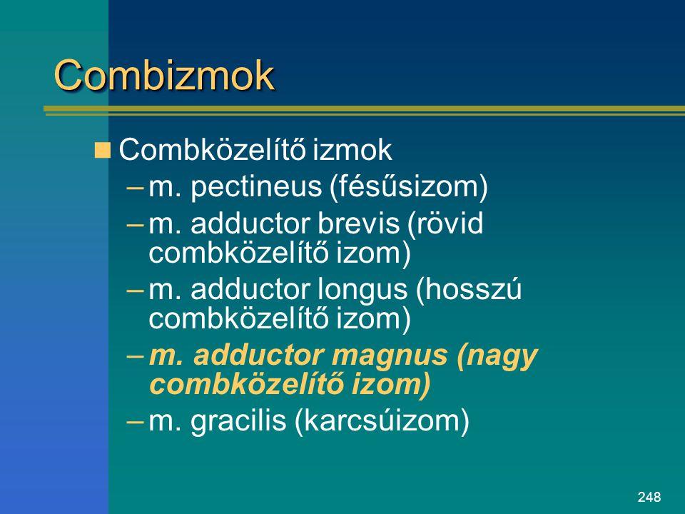248 CombizmokCombizmok Combközelítő izmok –m. pectineus (fésűsizom) –m. adductor brevis (rövid combközelítő izom) –m. adductor longus (hosszú combköze