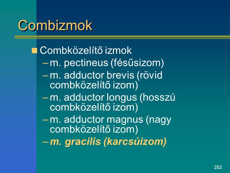 252 CombizmokCombizmok Combközelítő izmok –m. pectineus (fésűsizom) –m. adductor brevis (rövid combközelítő izom) –m. adductor longus (hosszú combköze