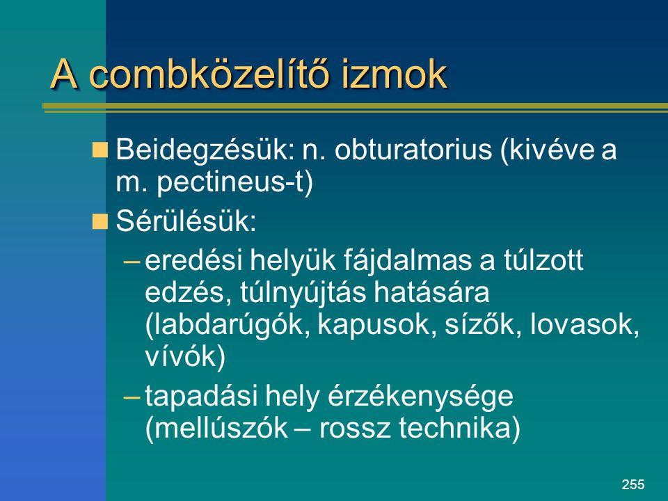 255 A combközelítő izmok Beidegzésük: n. obturatorius (kivéve a m. pectineus-t) Sérülésük: –eredési helyük fájdalmas a túlzott edzés, túlnyújtás hatás