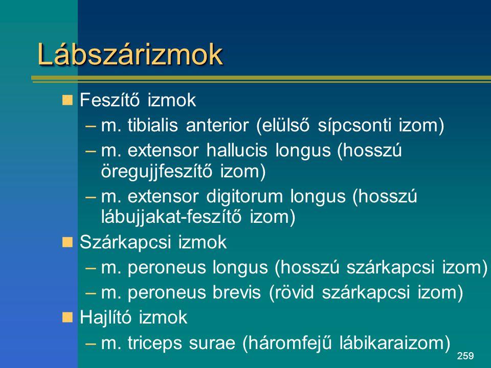 259 LábszárizmokLábszárizmok Feszítő izmok –m. tibialis anterior (elülső sípcsonti izom) –m. extensor hallucis longus (hosszú öregujjfeszítő izom) –m.