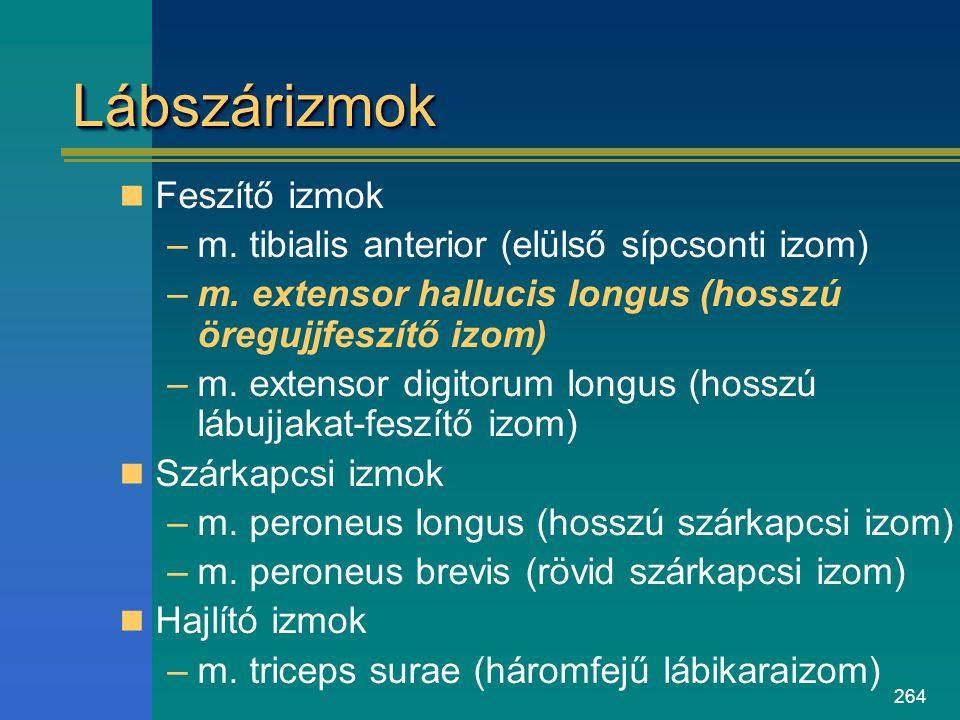 264 LábszárizmokLábszárizmok Feszítő izmok –m. tibialis anterior (elülső sípcsonti izom) –m. extensor hallucis longus (hosszú öregujjfeszítő izom) –m.