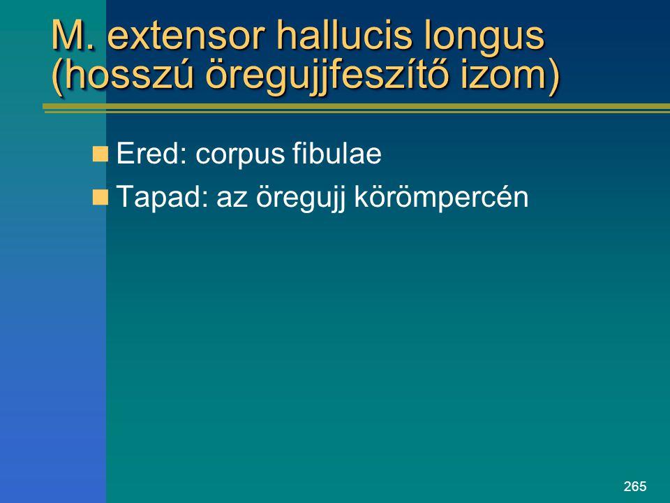 265 M. extensor hallucis longus (hosszú öregujjfeszítő izom) Ered: corpus fibulae Tapad: az öregujj körömpercén