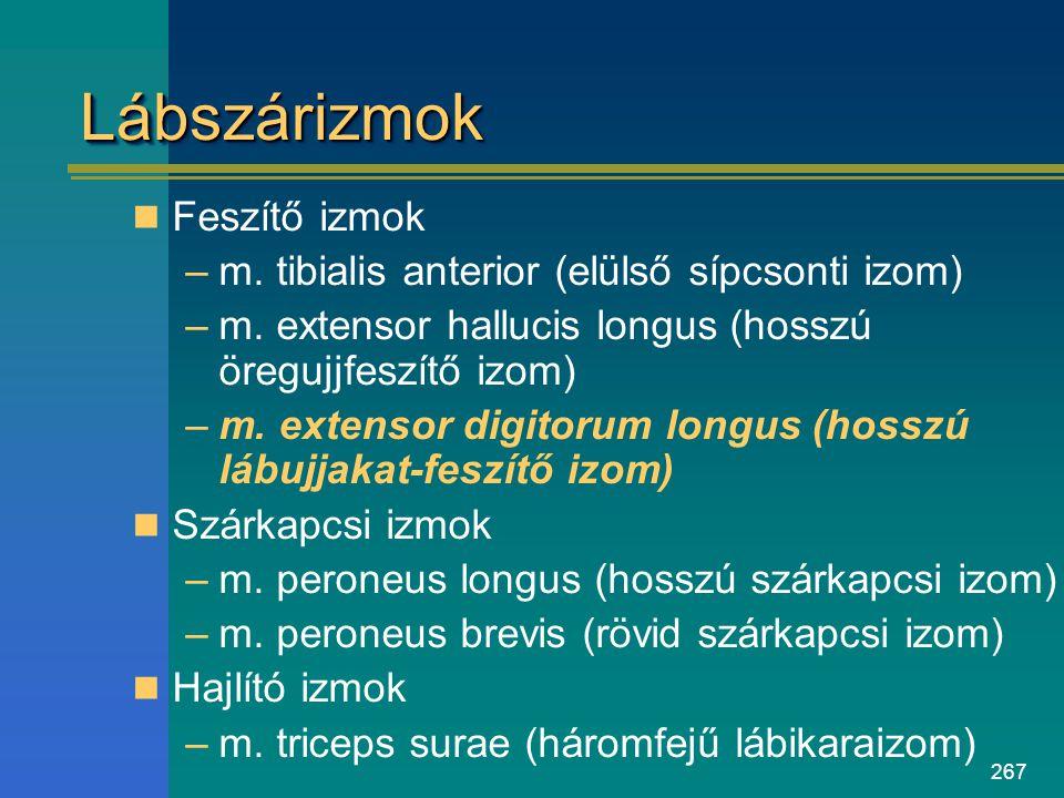 267 LábszárizmokLábszárizmok Feszítő izmok –m. tibialis anterior (elülső sípcsonti izom) –m. extensor hallucis longus (hosszú öregujjfeszítő izom) –m.