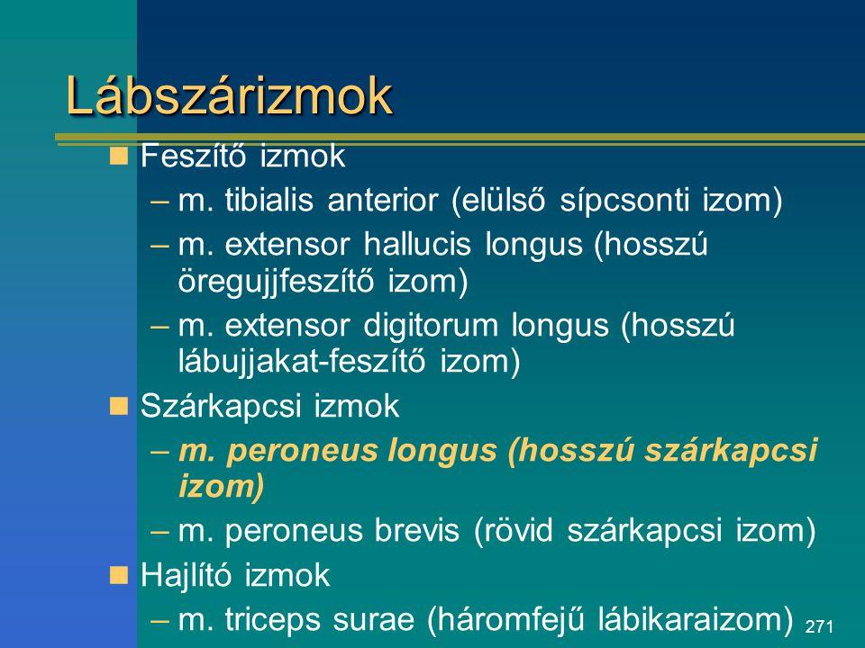 271 LábszárizmokLábszárizmok Feszítő izmok –m. tibialis anterior (elülső sípcsonti izom) –m. extensor hallucis longus (hosszú öregujjfeszítő izom) –m.