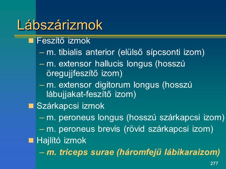 277 LábszárizmokLábszárizmok Feszítő izmok –m. tibialis anterior (elülső sípcsonti izom) –m. extensor hallucis longus (hosszú öregujjfeszítő izom) –m.