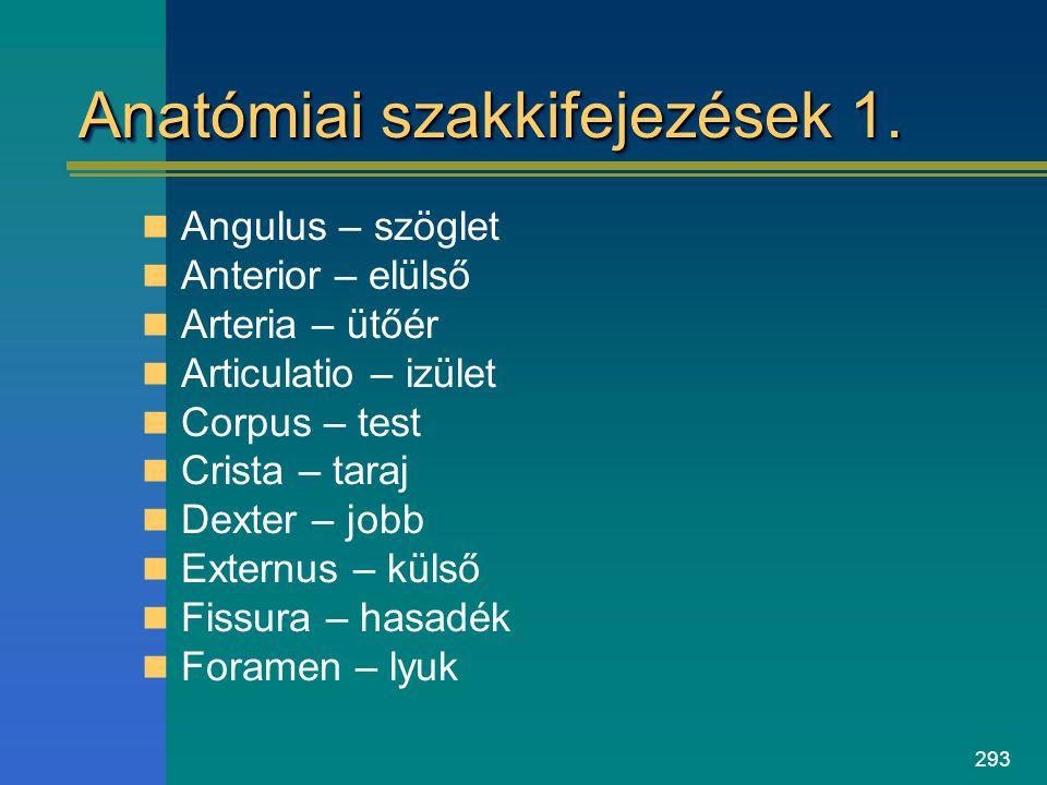 293 Anatómiai szakkifejezések 1. Angulus – szöglet Anterior – elülső Arteria – ütőér Articulatio – izület Corpus – test Crista – taraj Dexter – jobb E