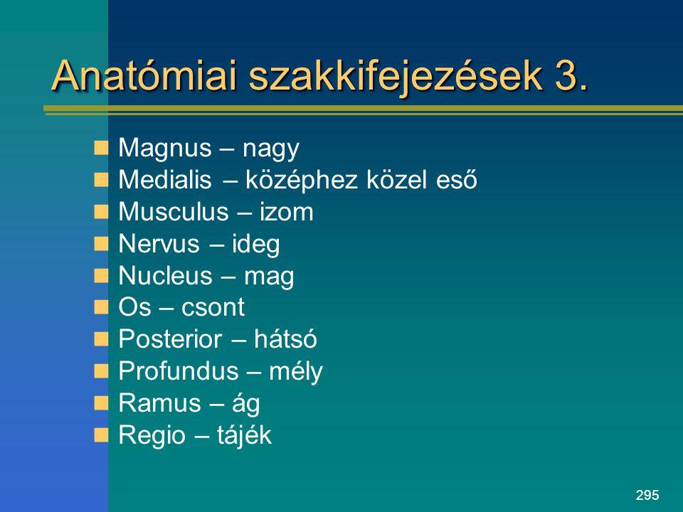 295 Anatómiai szakkifejezések 3. Magnus – nagy Medialis – középhez közel eső Musculus – izom Nervus – ideg Nucleus – mag Os – csont Posterior – hátsó