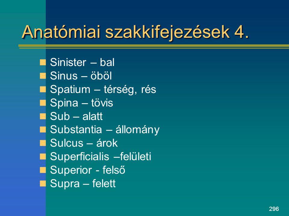 296 Anatómiai szakkifejezések 4. Sinister – bal Sinus – öböl Spatium – térség, rés Spina – tövis Sub – alatt Substantia – állomány Sulcus – árok Super