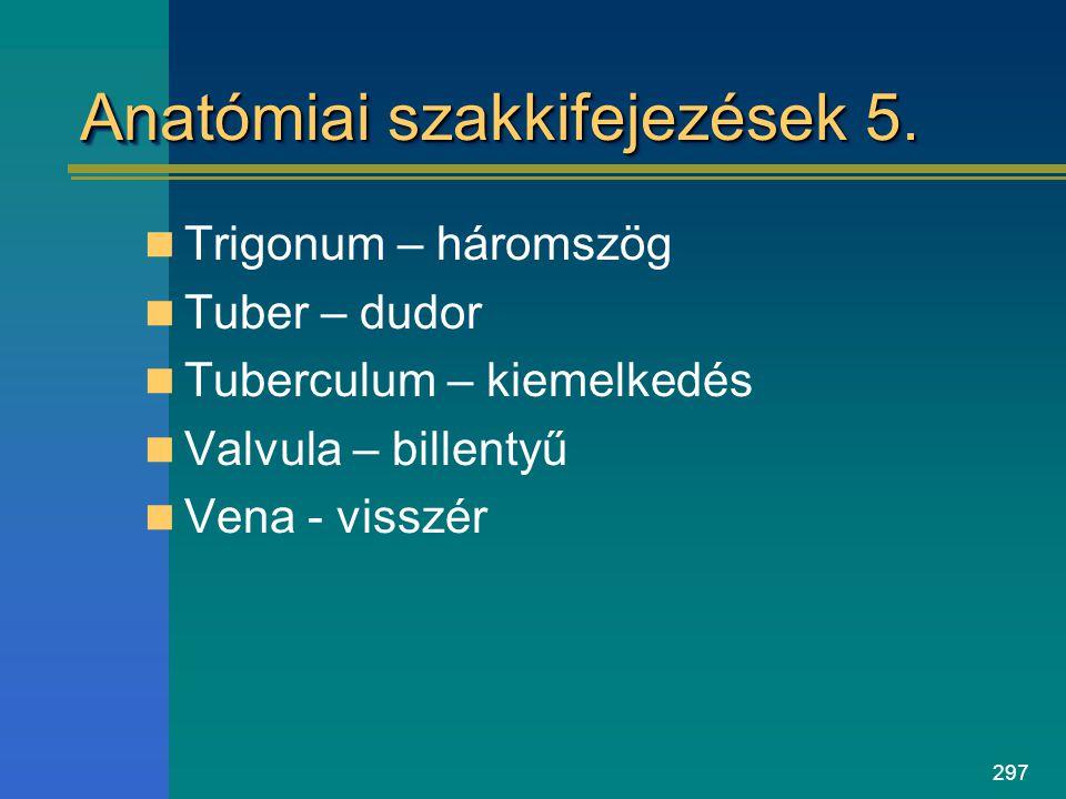 297 Anatómiai szakkifejezések 5. Trigonum – háromszög Tuber – dudor Tuberculum – kiemelkedés Valvula – billentyű Vena - visszér