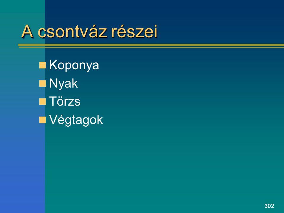 302 A csontváz részei Koponya Nyak Törzs Végtagok
