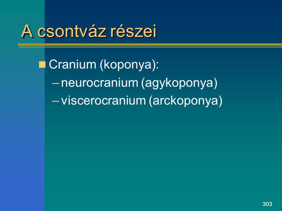 303 A csontváz részei Cranium (koponya): –neurocranium (agykoponya) –viscerocranium (arckoponya)