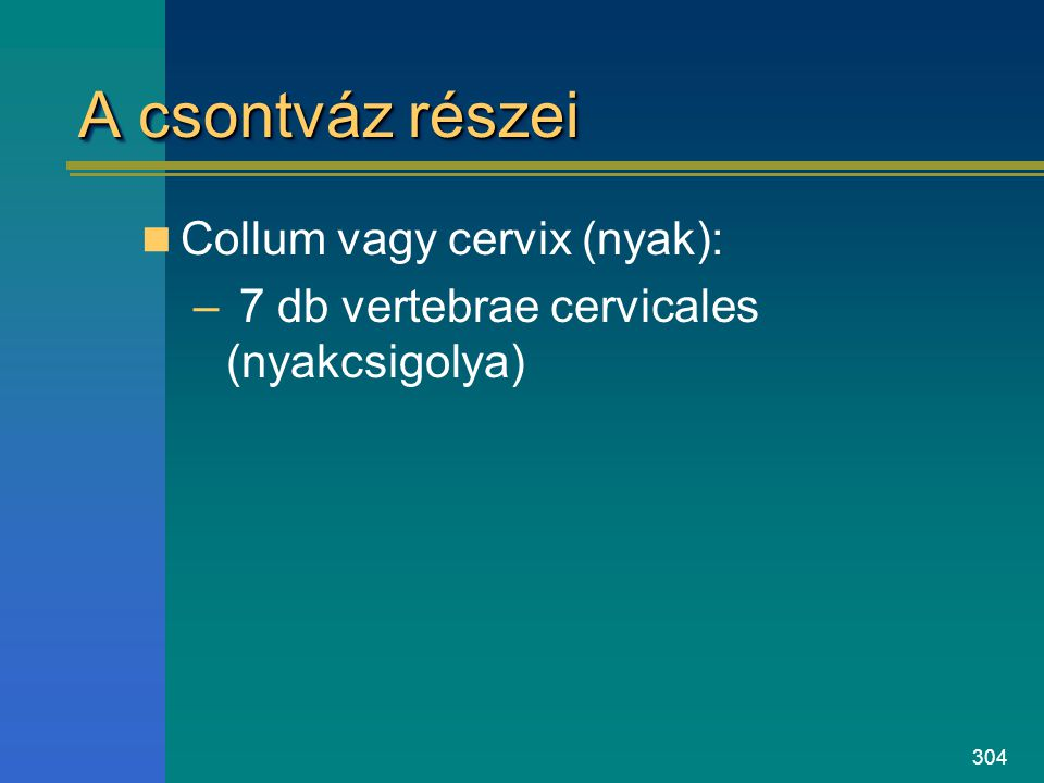304 A csontváz részei Collum vagy cervix (nyak): – 7 db vertebrae cervicales (nyakcsigolya)