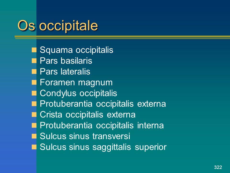322 Os occipitale Squama occipitalis Pars basilaris Pars lateralis Foramen magnum Condylus occipitalis Protuberantia occipitalis externa Crista occipi